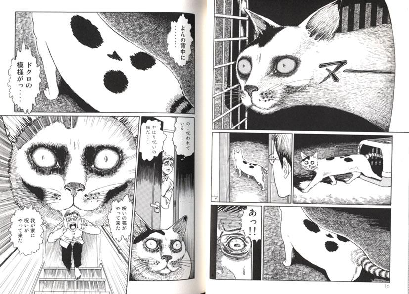 Korean Cat And Dog Comic