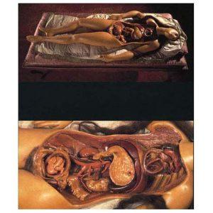 anatomica1